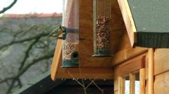 Garden Birds feeding at hanging wildbird seed feeder Stock Footage