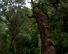 A person ziplining across tree canopies, Storms River, Port Elizabeth Stock Footage