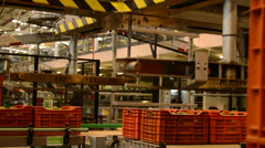 Industry fruit close up - stock footage
