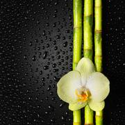 Orchid and bamboo grove on black background Stock Photos