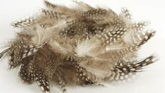 Feathers easter background Stock Footage