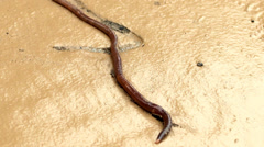 Earthworm Stock Footage