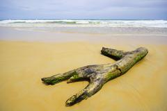 log on south of thailand, phuket beach - stock photo
