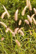 Flower grass impact sunlight. Stock Photos