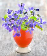 violets flowers (viola odorata) - stock photo