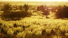 Desert Golden Flower Carpet Time Lapse -Zoom Out- Stock Footage
