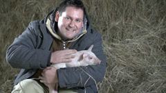 Man strokes piggy in his lap cheerfully  - stock footage
