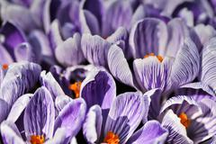 spring impressions - stock photo