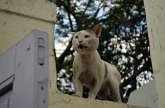 Alert cat - stock photo