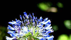 Bunch of flowers Stock Footage
