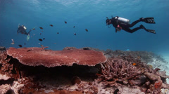 Diver swimming over large coral with fish - stock footage
