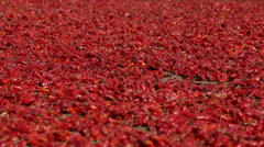 Red Peppers Drying in the Sun Stock Footage