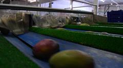 Mangoes in industrial line Stock Footage