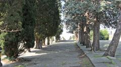 Italian tree alley, Trieste Stock Footage