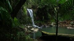 Rainforest Waterfall loop - stock footage