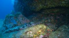 Underwater footage diver fish mostelle corsica corse mediterranean Stock Footage