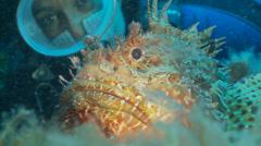 Underwater footage fish chapon diver coral sea urchin corsica corse mediterranea Stock Footage