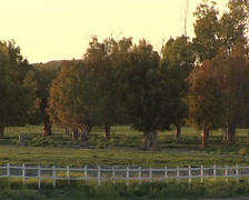 Iberian horse. Herd of Horses in a field Stock Footage