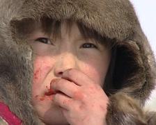 Nenet eating a raw reindeer Stock Footage