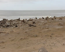 Seals in Namibia coast Stock Footage