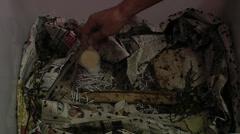 Feeding crickets Stock Footage