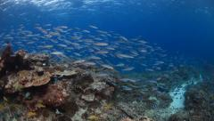 Colourful school of school of fish swimming over coral Stock Footage