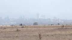 Kudu in the savanna, Nairobi city background Stock Footage