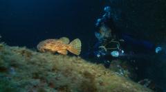 Underwater footage chapon fish diver corsica corse mediterranean Stock Footage