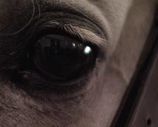 Horse's eye. Pure Spanish Horse Stock Footage