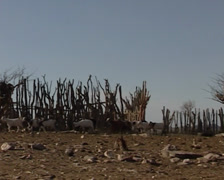 Settlement himba in kunene Stock Footage
