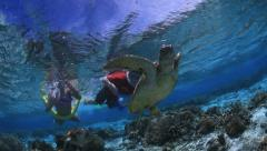 kids snorkelling with turtles - stock footage