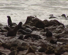 Seals in Namibia Skeleton Coast National Park Stock Footage