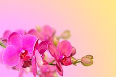 Stock Photo of purple orchid flowers branch on blurred gradient