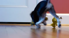 Puppy Plays Fetch Stock Footage