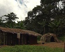 Pygmy village life style Stock Footage