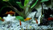Stock Video Footage of Aquarium with a lot of colorfull fish and plant