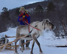 Driving a reindeer sled Stock Footage