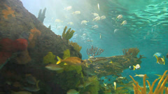 A close view of large schools of fish drifting in a sun-drenched coral reef Stock Footage