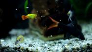 Stock Video Footage of Aquarium with colorfull fishes eating