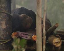 Punan resting Stock Footage