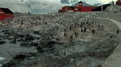 Presidente Videla station and penguin colony Stock Footage