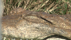 Crocodile eye Stock Footage