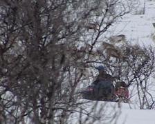 Driving snowmobile between reindeer Stock Footage