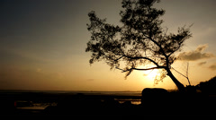 Timelapse of sun goes down over the sea with silhouette of tree - stock footage
