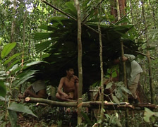 Mix of cultures. Caucasian man and Punan making hut Stock Footage
