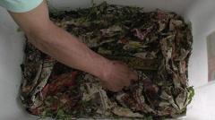 Stock Video Footage of Feeding crickets