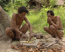 Mentawai making curare poison Stock Footage