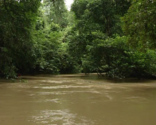 River overflow in the jungle Stock Footage