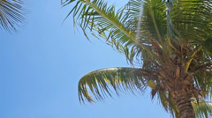 Palm trees blowing in the wind Stock Footage