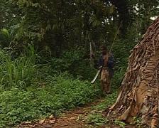 Pygmy tribe village life Stock Footage